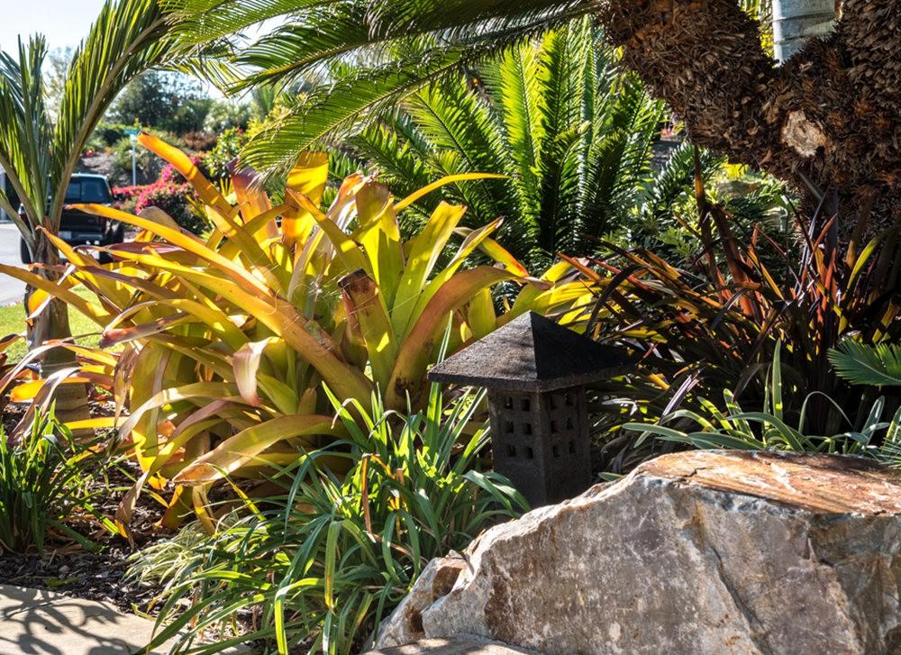 南加州的凤梨植物_图1-3