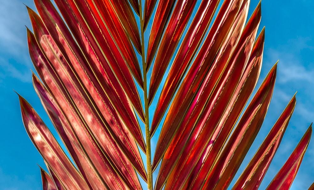 南加州的凤梨植物_图1-14