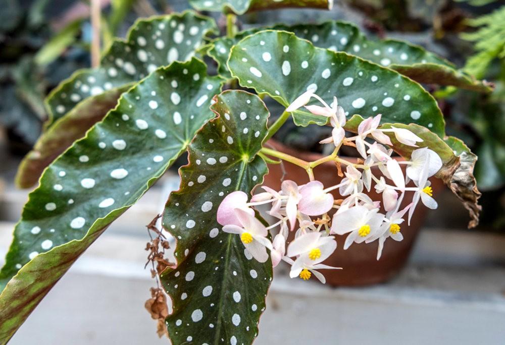 南加州的凤梨植物_图1-24