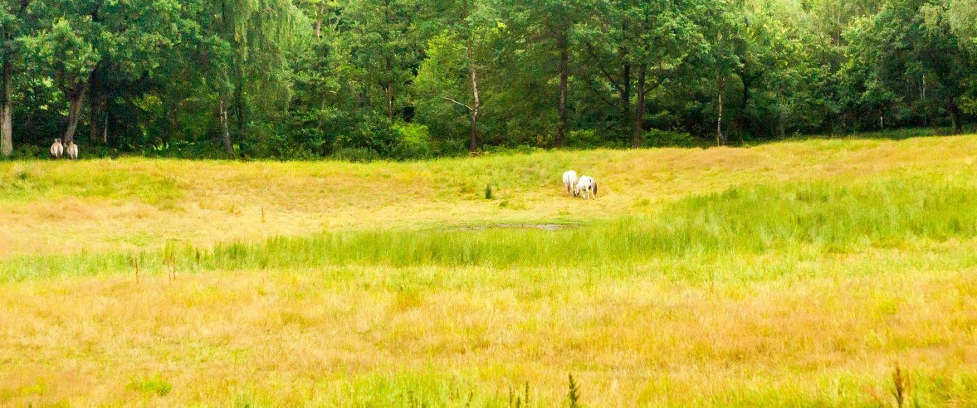 北欧旅途,牛羊成群_图1-18
