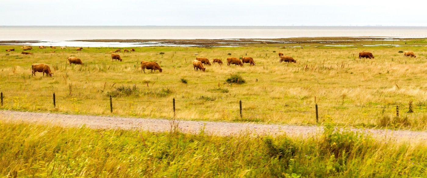 北欧旅途,牛羊成群_图1-20
