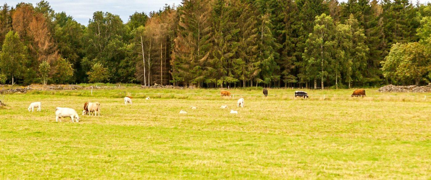 北欧旅途,牛羊成群_图1-24