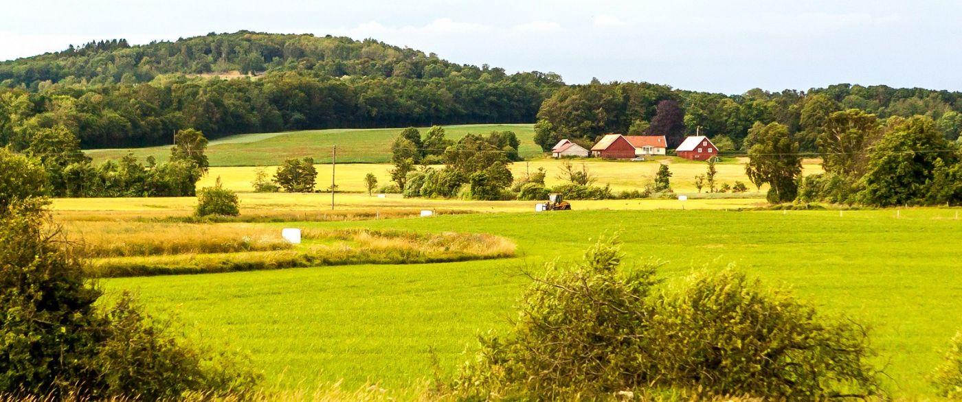 北欧旅途,牛羊成群_图1-23