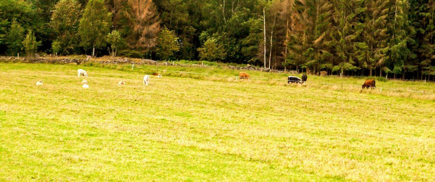 北欧旅途,牛羊成群_图1-26