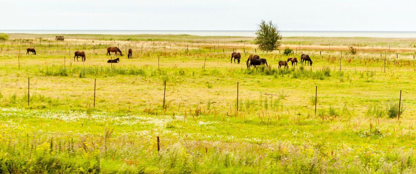 北欧旅途,牛羊成群_图1-27
