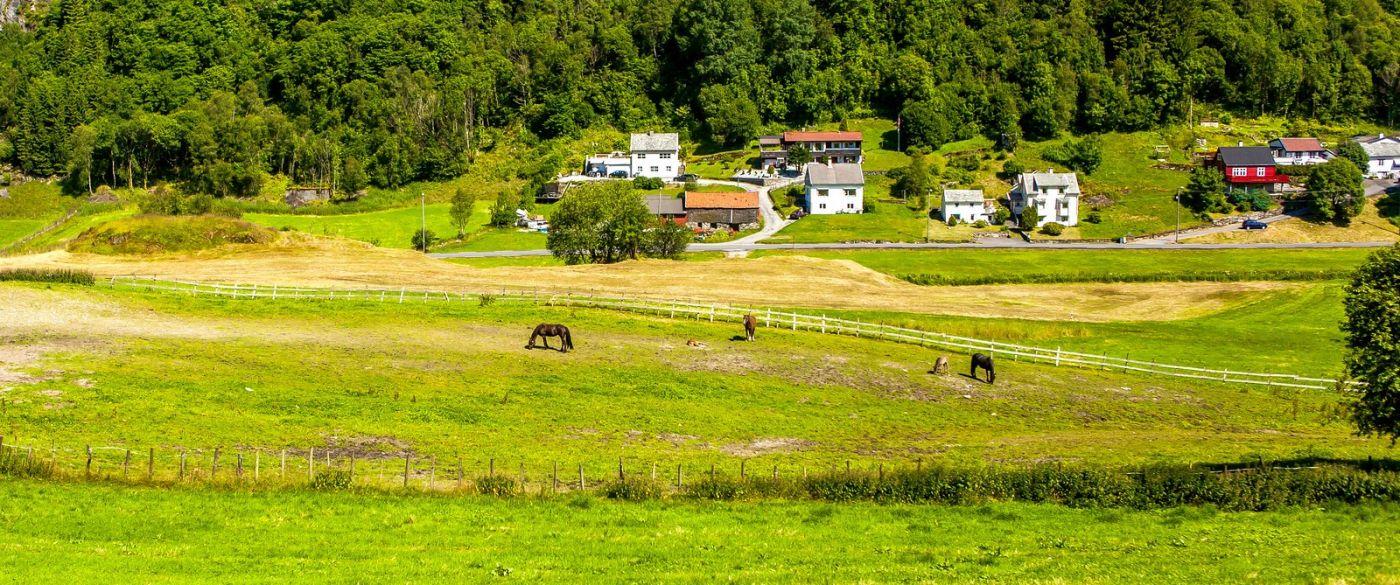 北欧旅途,牛羊成群_图1-37