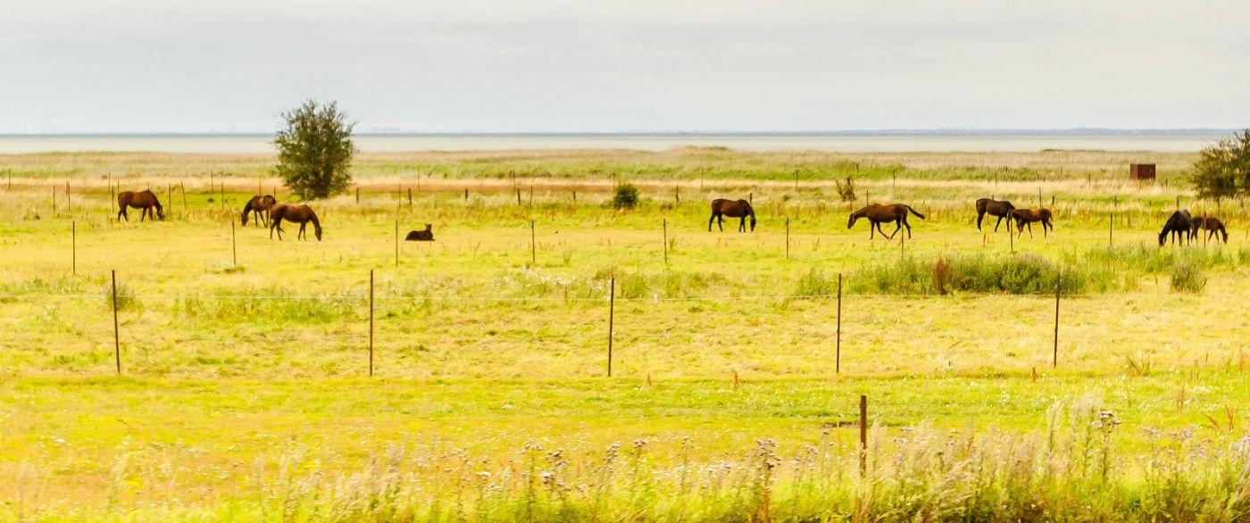 北欧旅途,牛羊成群_图1-39