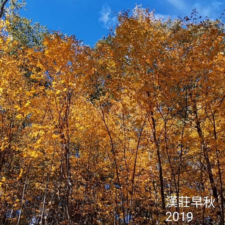 漢莊之秋2019_图1-7