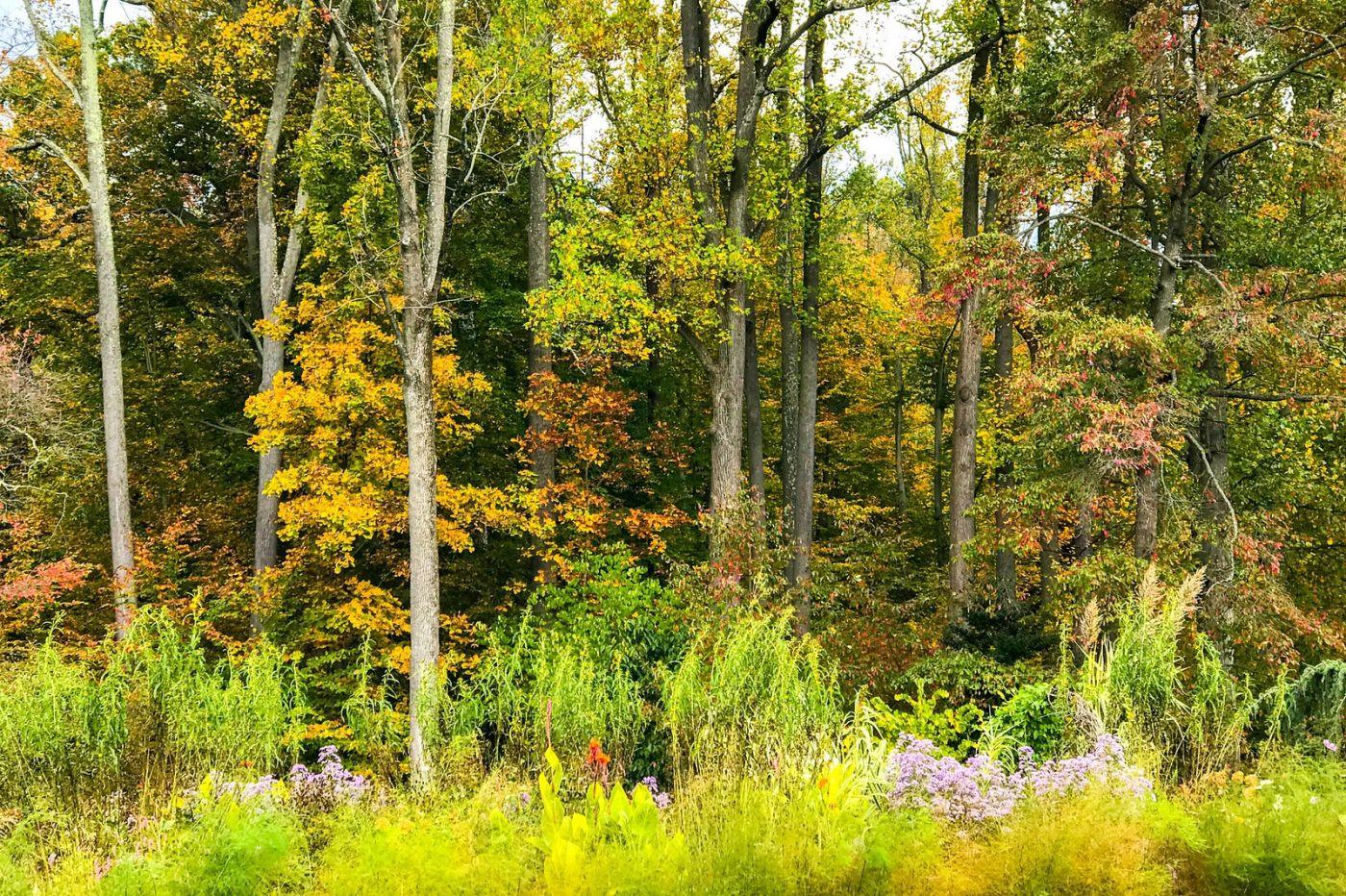 Chanticleer花园,季季有色彩_图1-6