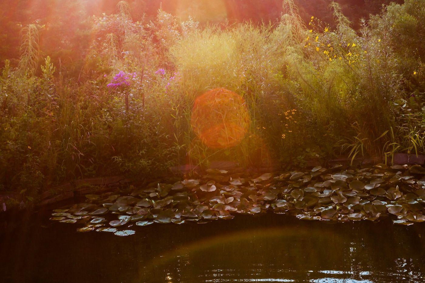 Chanticleer花园,季季有色彩_图1-5