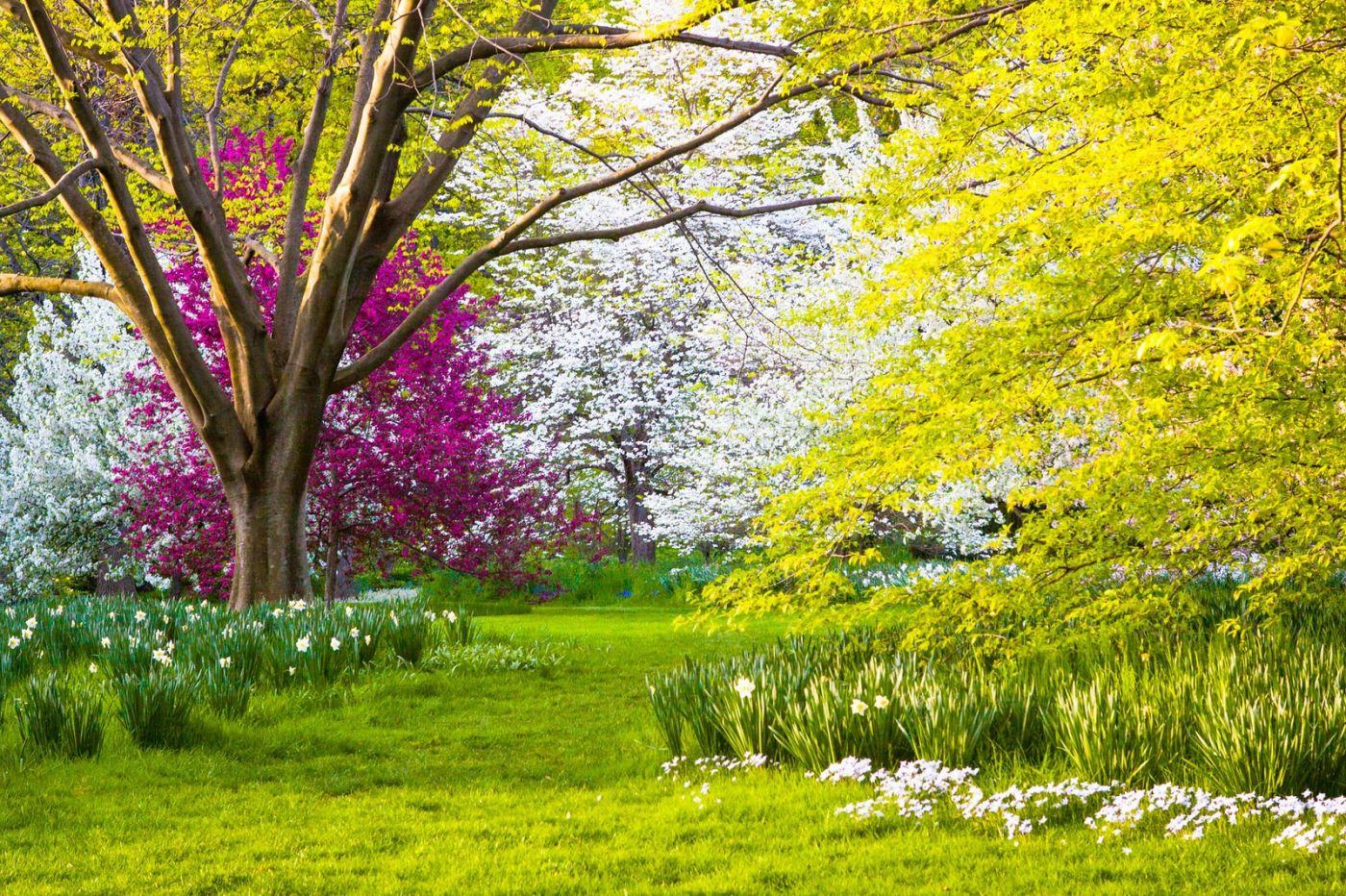 Chanticleer花园,季季有色彩_图1-2