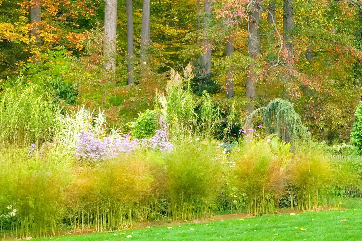 Chanticleer花园,季季有色彩_图1-8