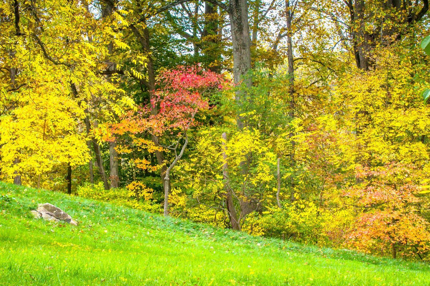 Chanticleer花园,季季有色彩_图1-9