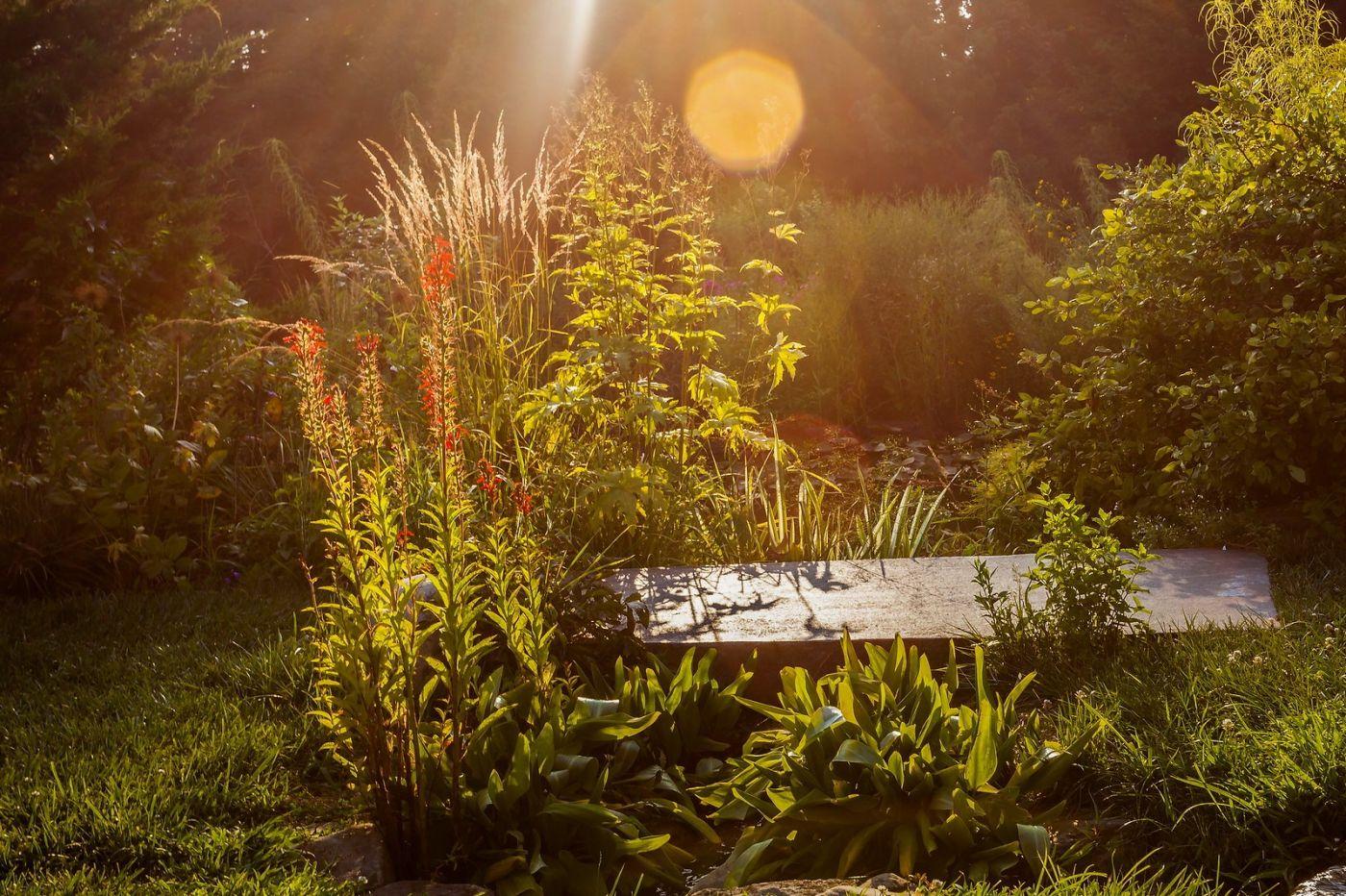 Chanticleer花园,季季有色彩_图1-18