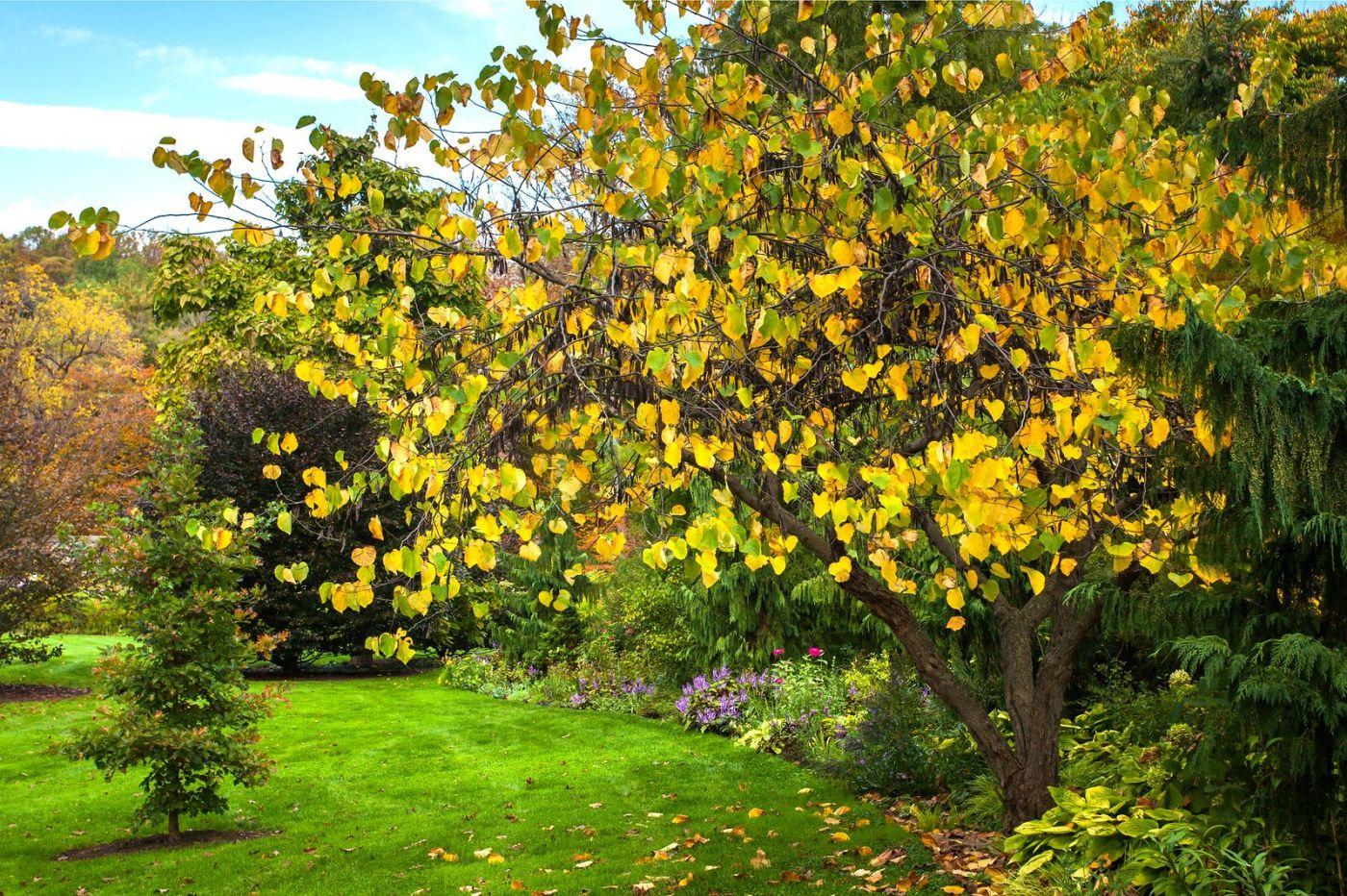 Chanticleer花园,季季有色彩_图1-26
