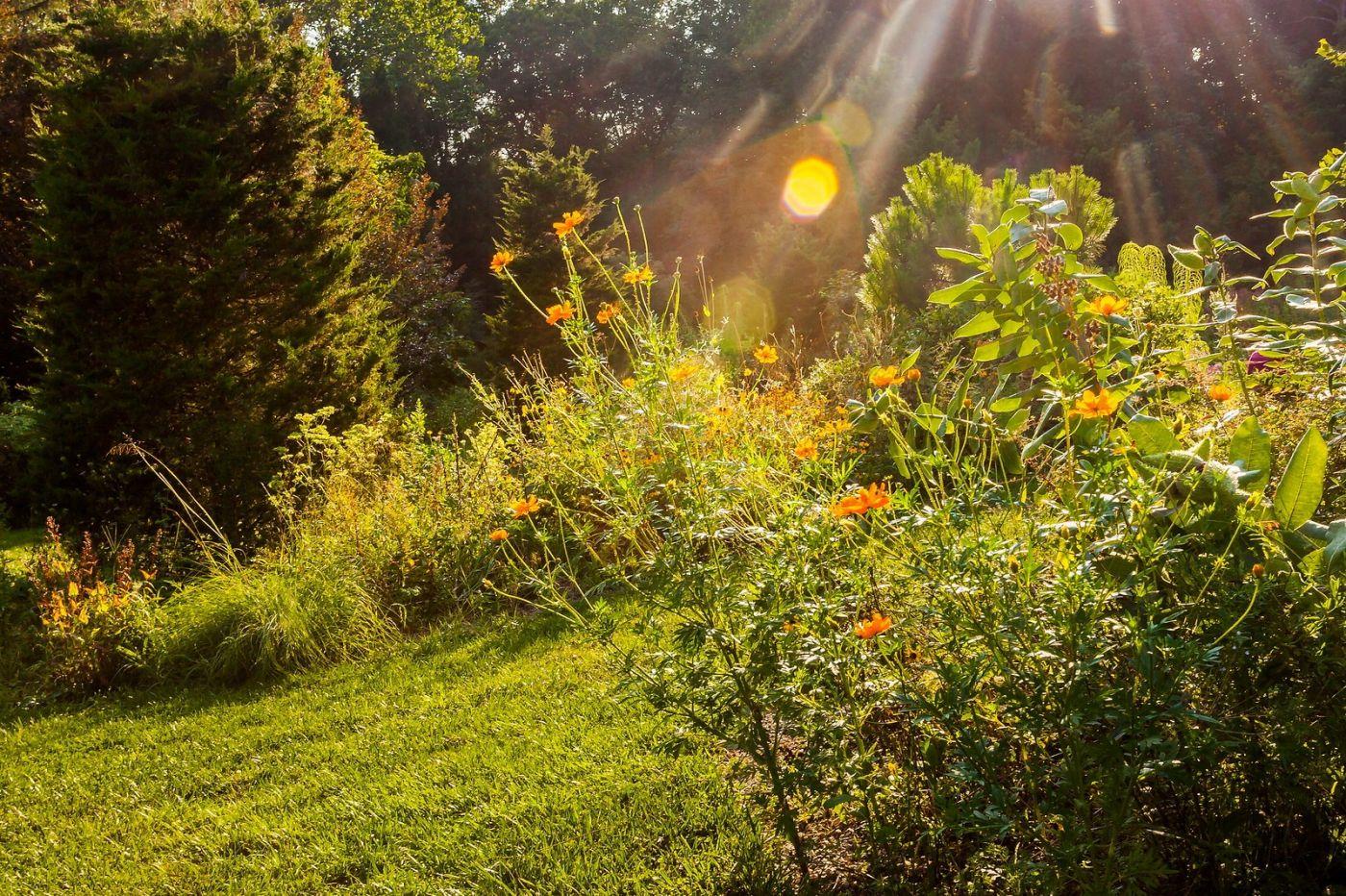 Chanticleer花园,季季有色彩_图1-29