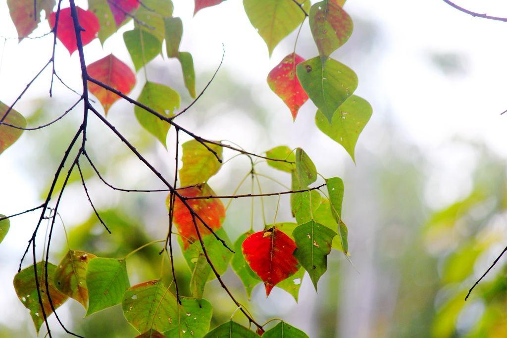 点点秋叶斑斓色_图1-2