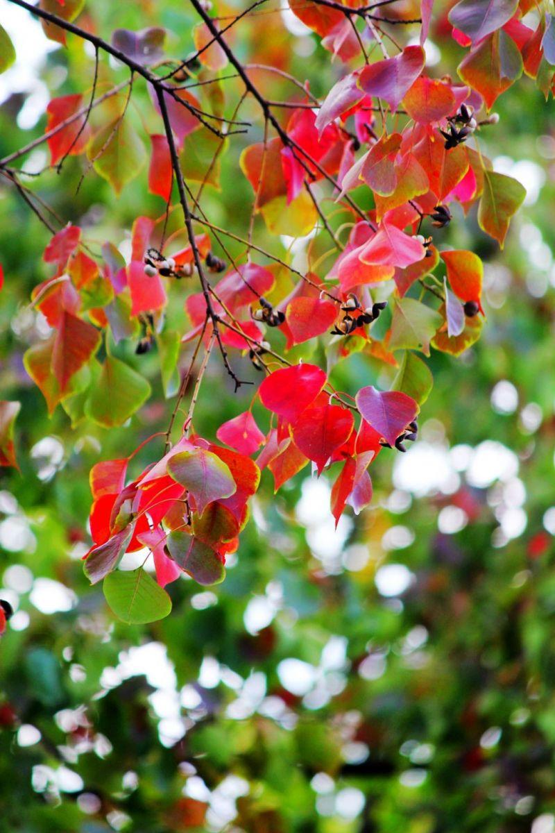 点点秋叶斑斓色_图1-4