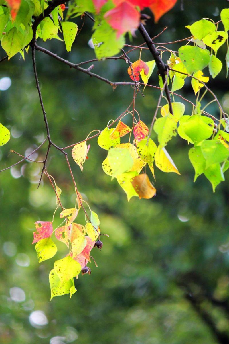 点点秋叶斑斓色_图1-5