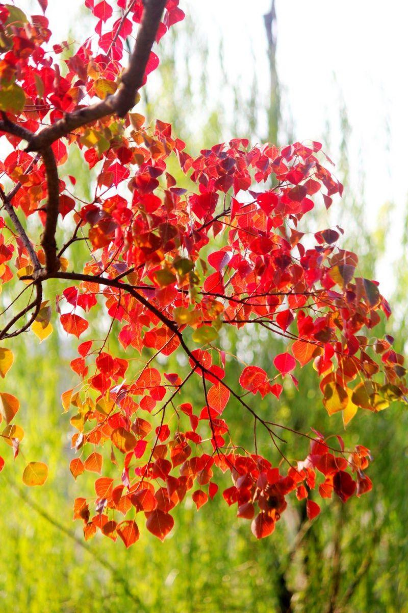 点点秋叶斑斓色_图1-8