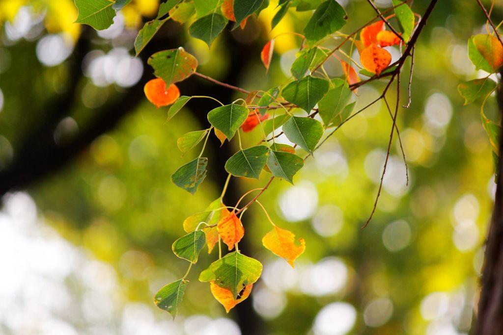 点点秋叶斑斓色_图1-12
