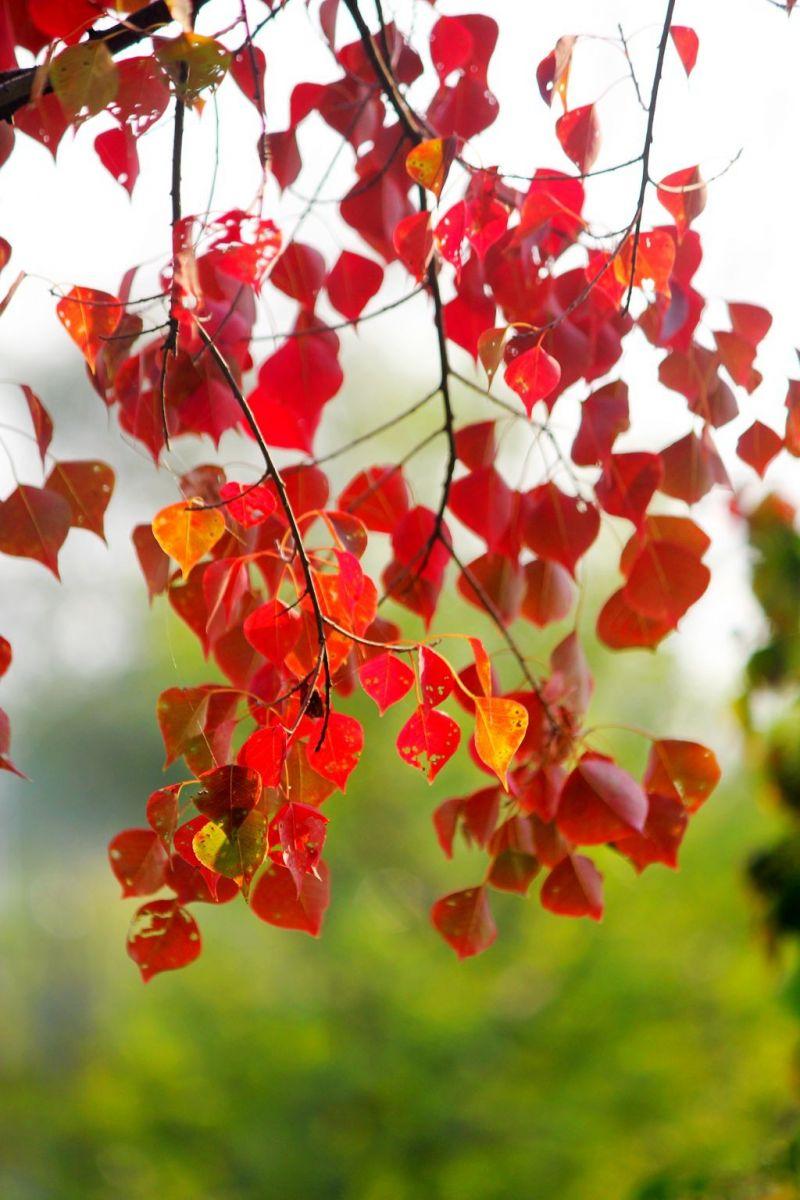 点点秋叶斑斓色_图1-11