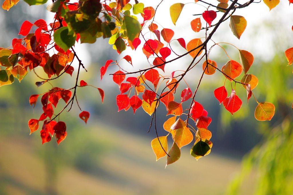 点点秋叶斑斓色_图1-9