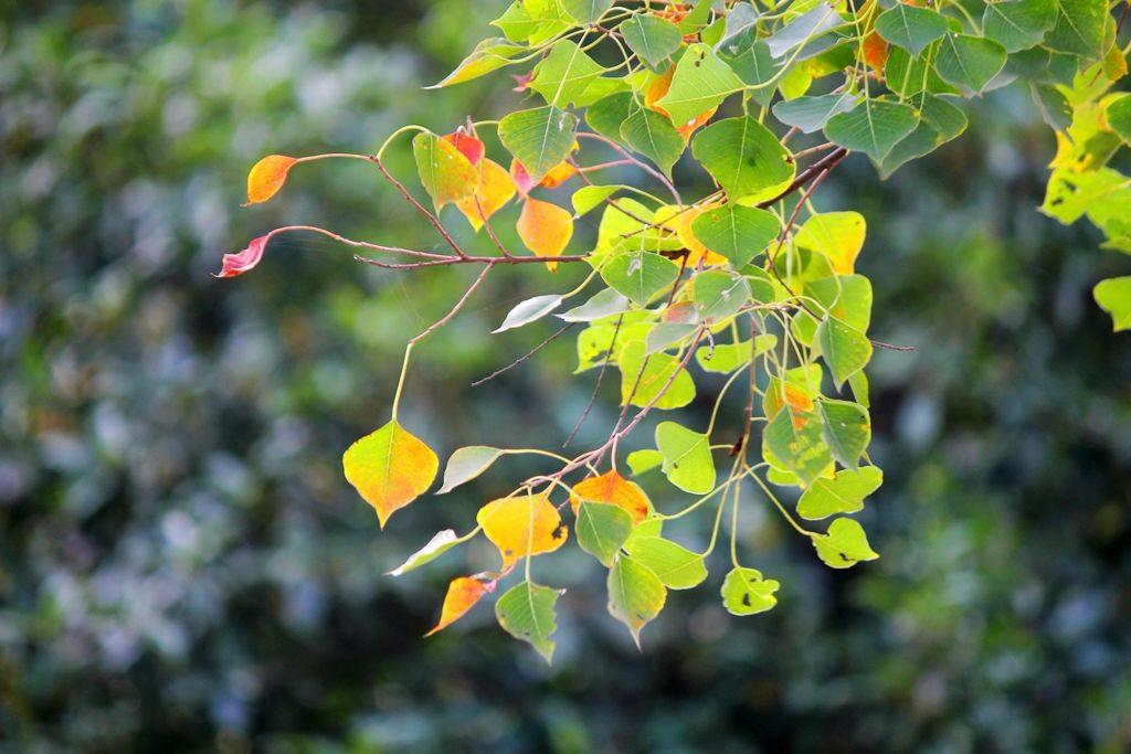 点点秋叶斑斓色_图1-10