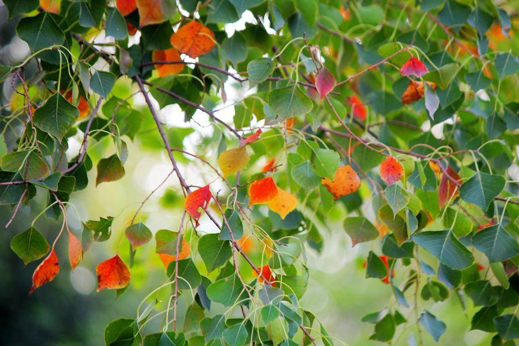 点点秋叶斑斓色_图1-14