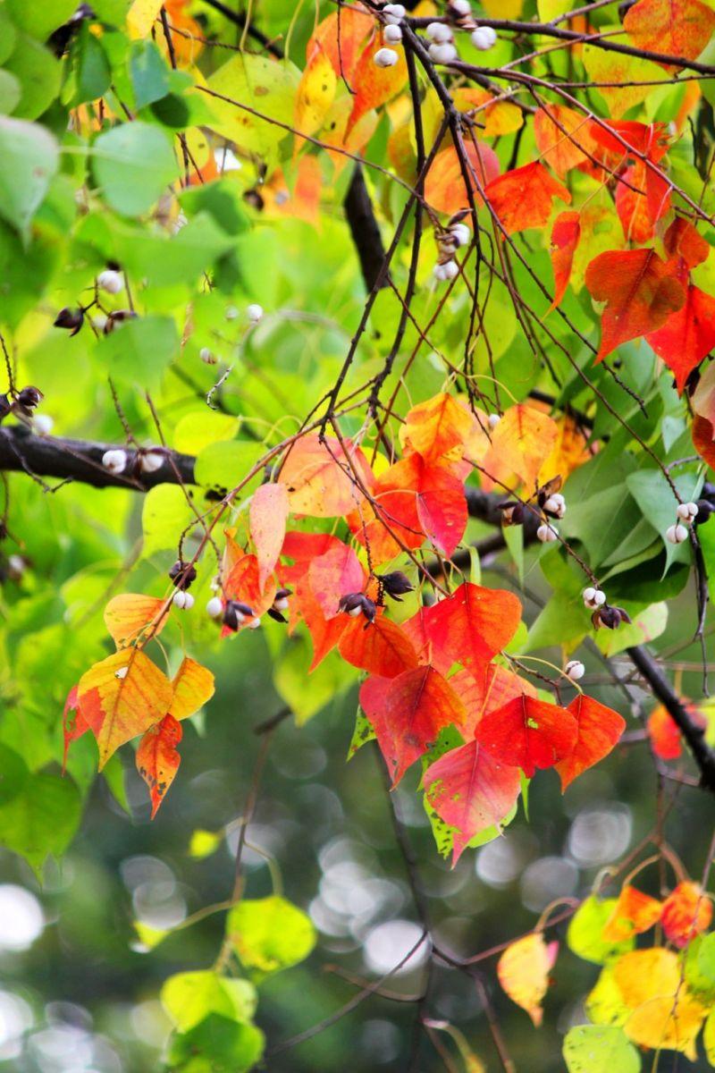 点点秋叶斑斓色_图1-17