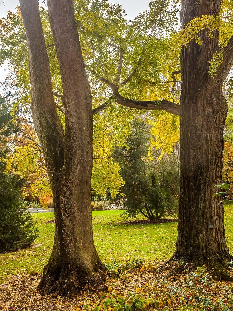 宾州长木公园,春去秋来_图1-31