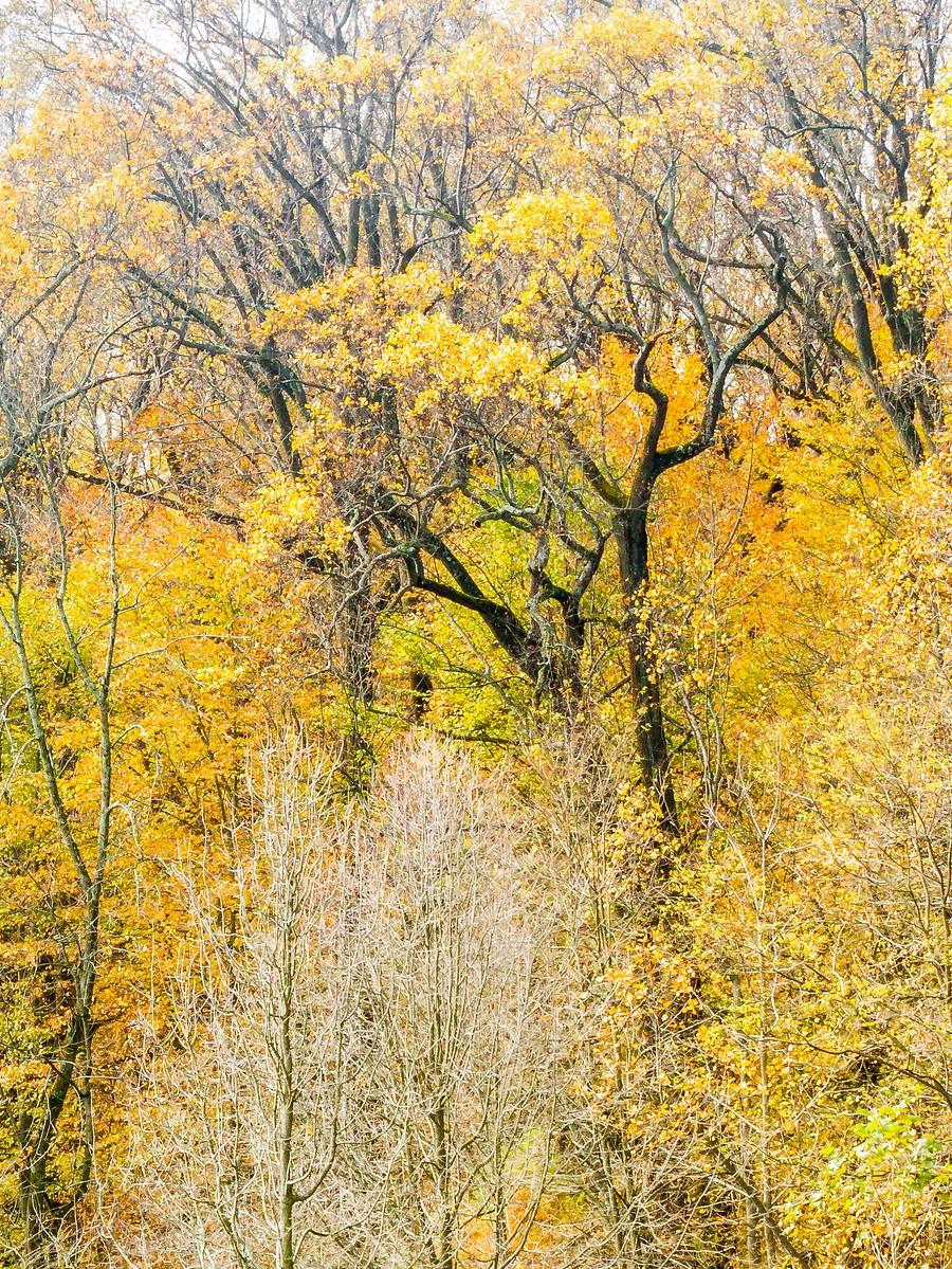 宾州长木公园,春去秋来_图1-25