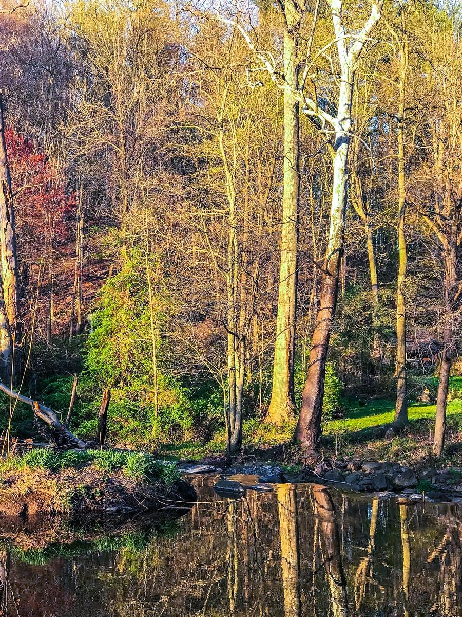 宾州长木公园,春去秋来_图1-27