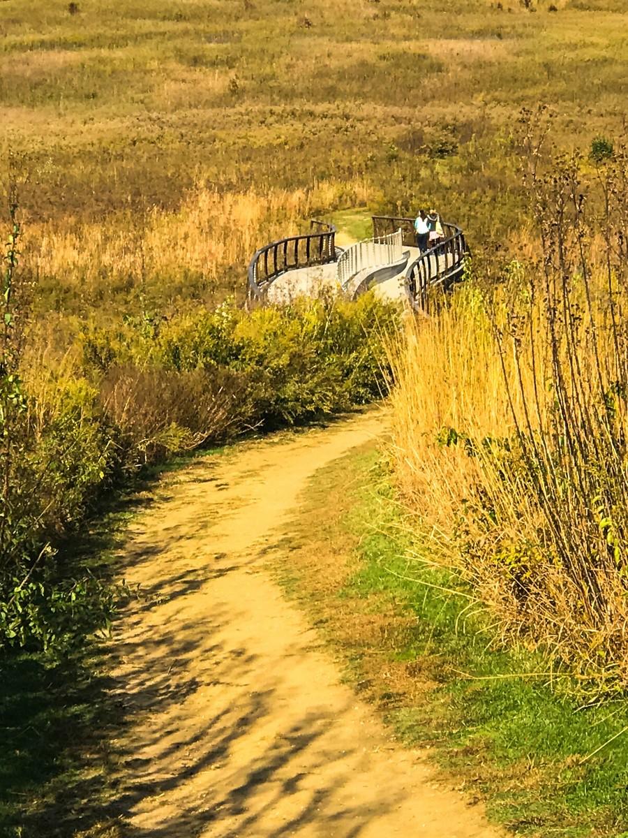宾州长木公园,春去秋来_图1-24