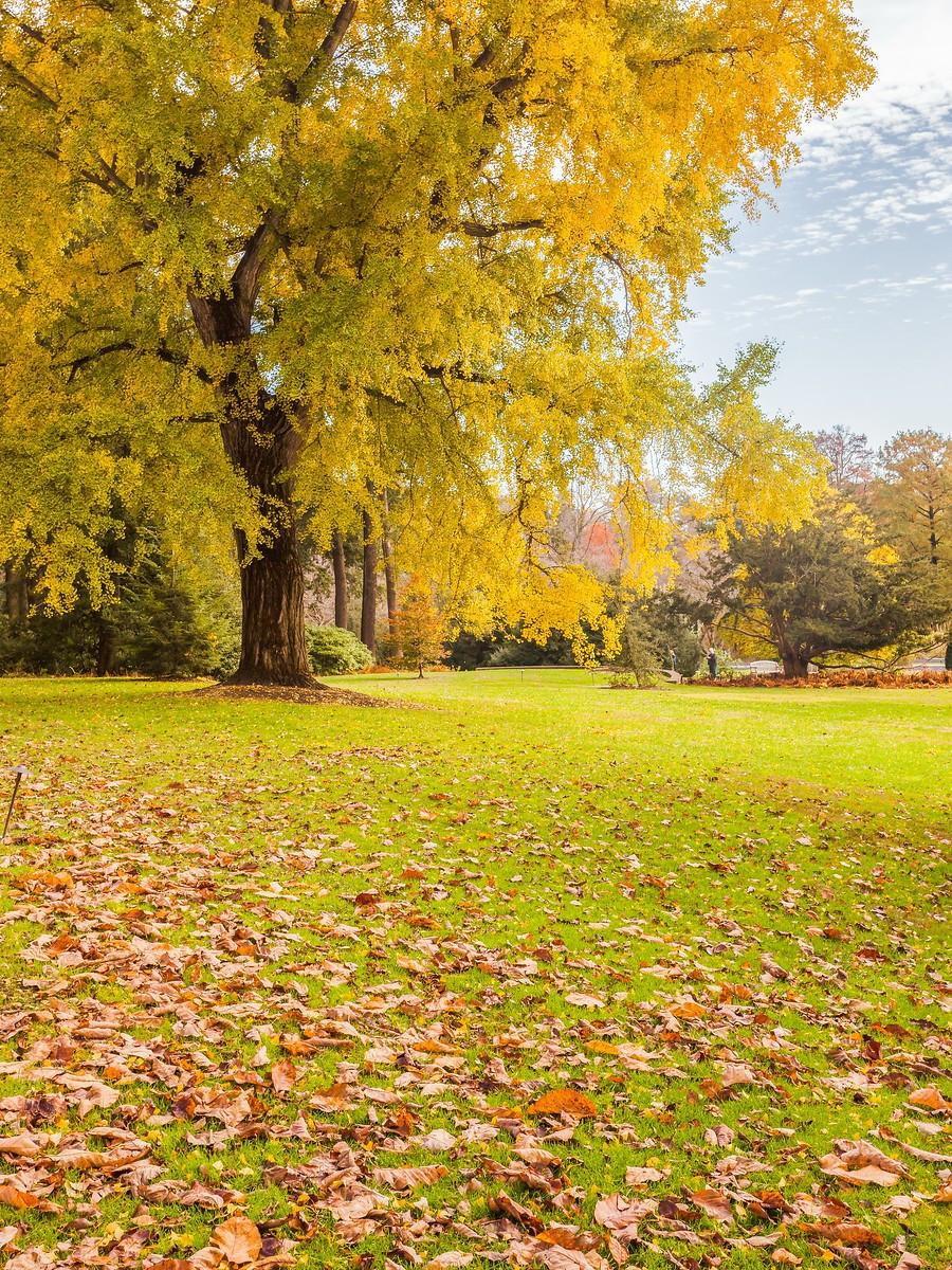 宾州长木公园,春去秋来_图1-20