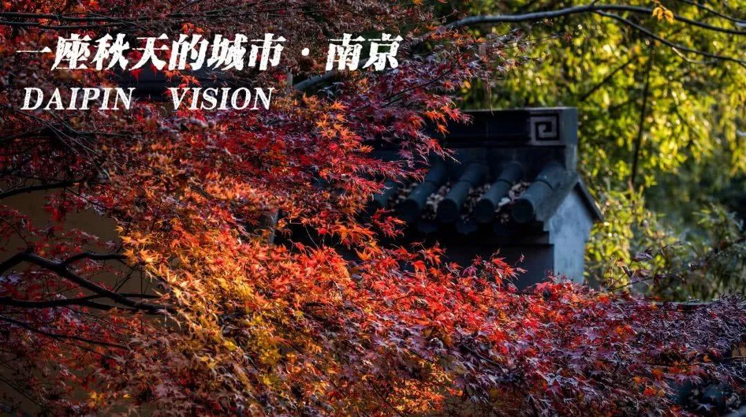 宋羽:南京的秋_图1-1