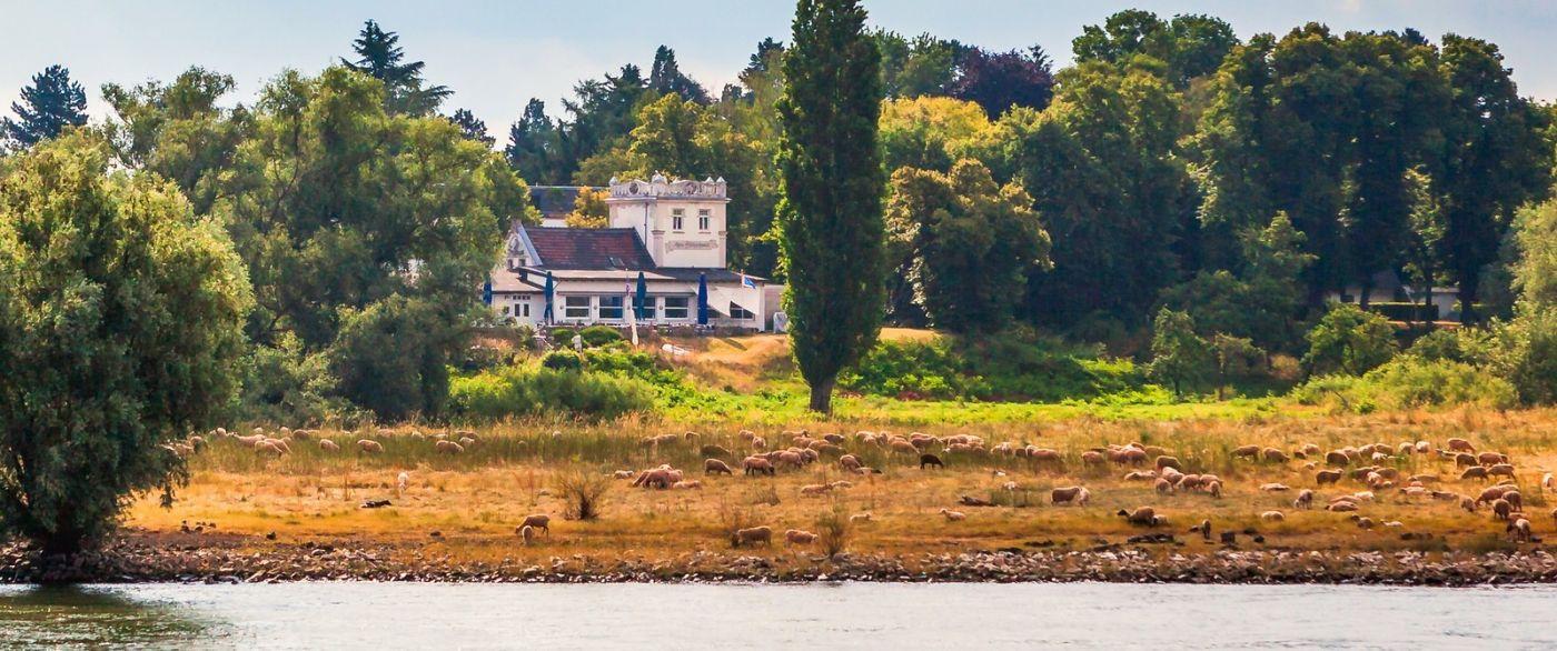 畅游莱茵河,一路的风景_图1-5
