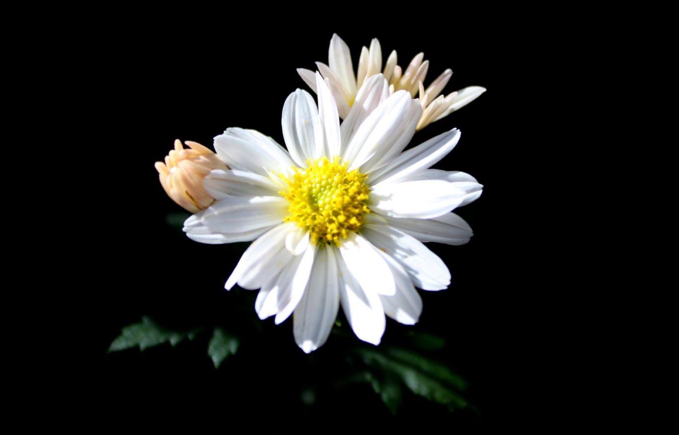 植物园日本菊花展_图1-12