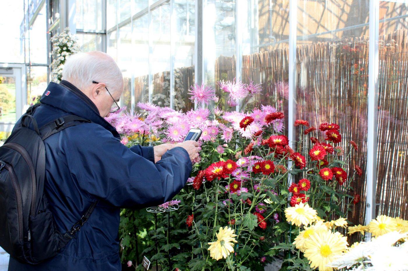 植物园日本菊花展_图1-37