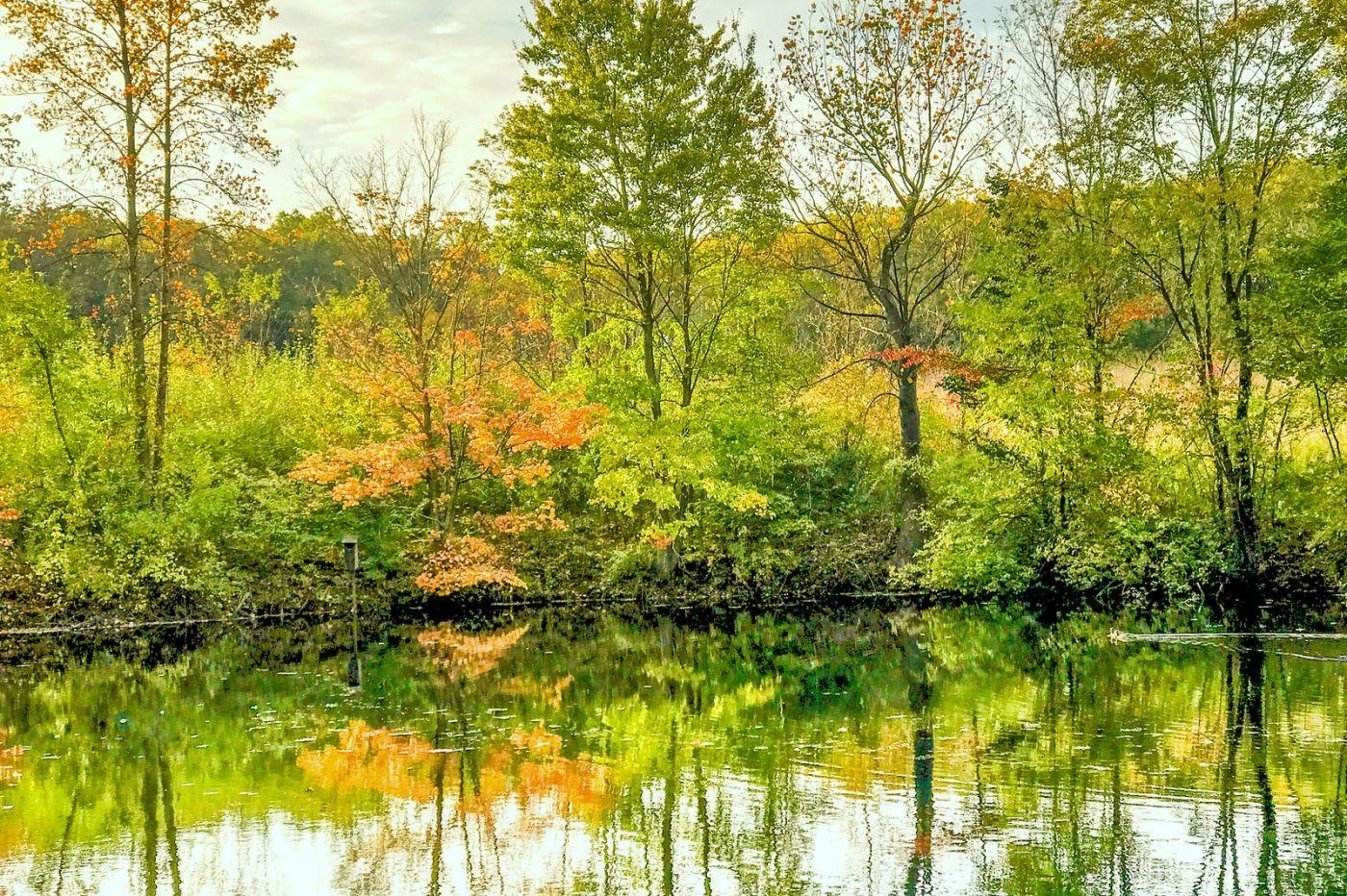 宾州长木公园,秋意浓浓_图1-38