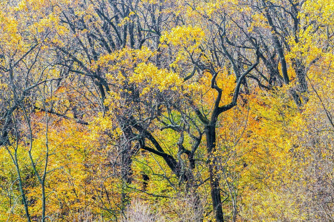 宾州长木公园,秋意浓浓_图1-36