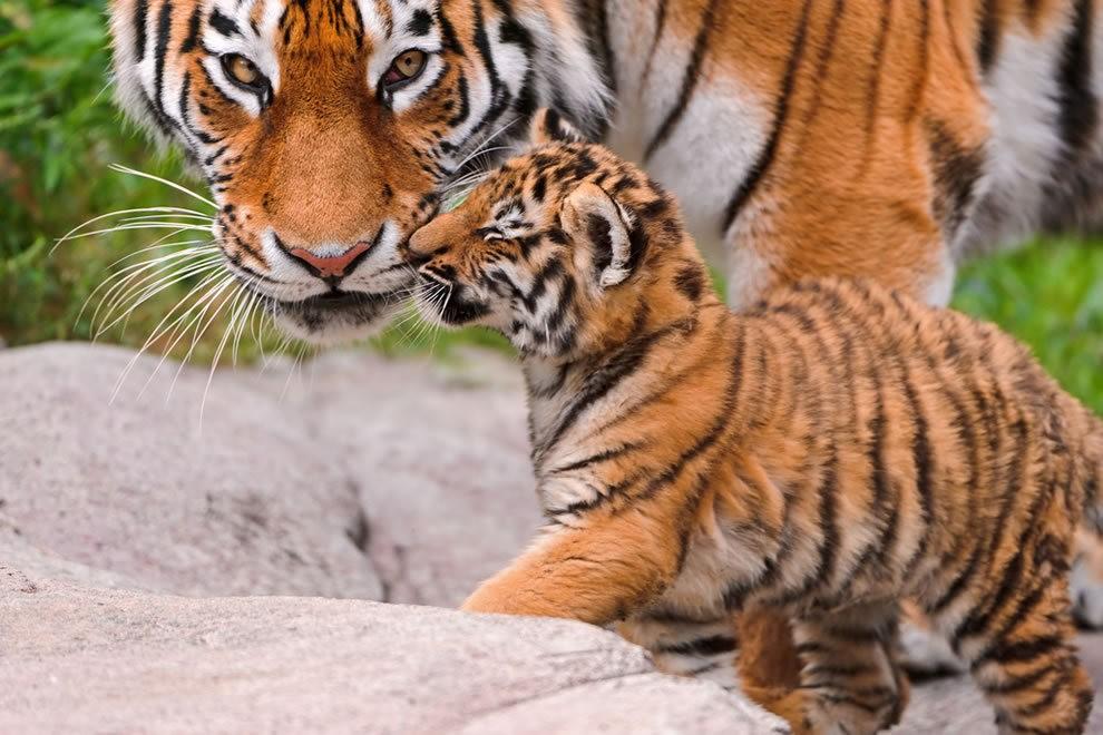 动物母亲节_图1-1