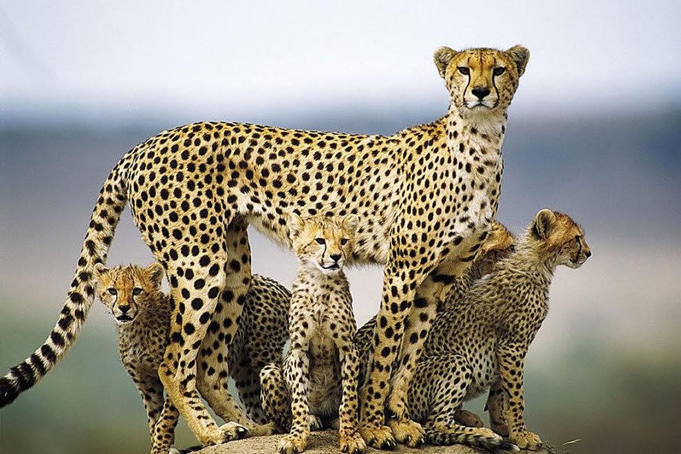 动物母亲节_图1-4