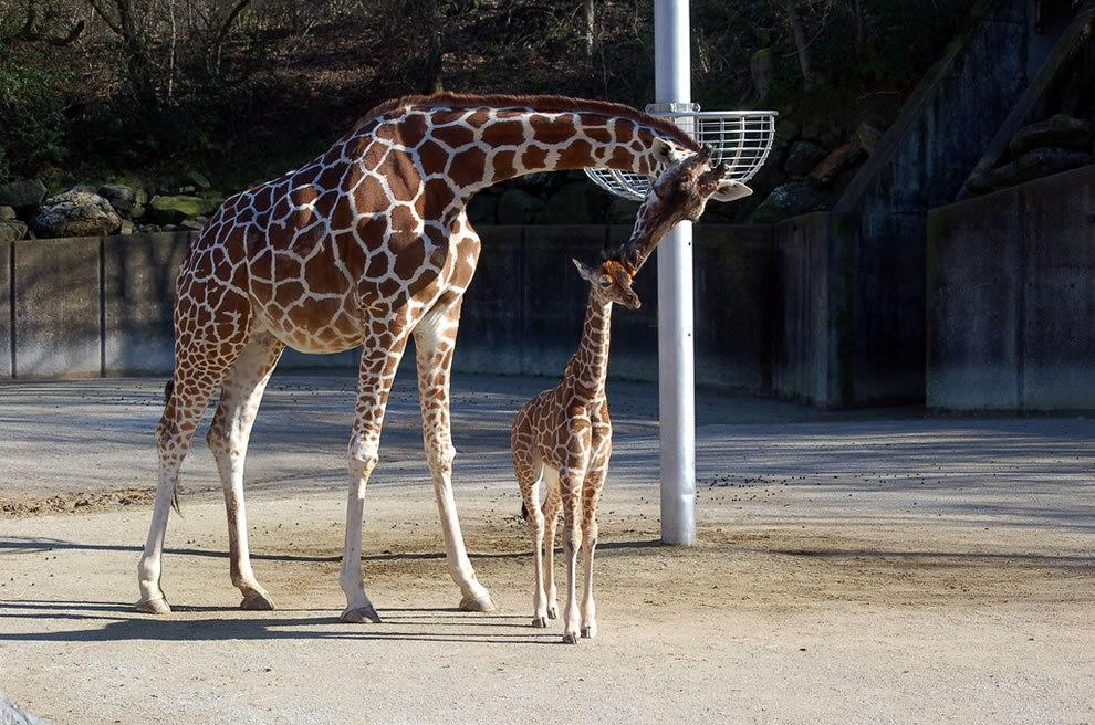 动物母亲节_图1-7