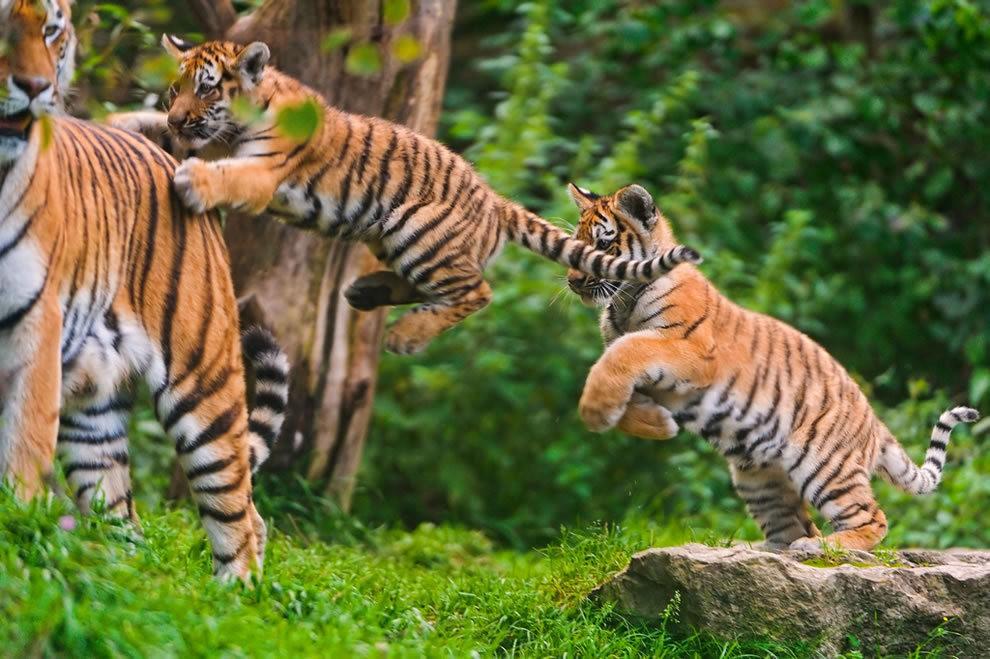 动物母亲节_图1-14