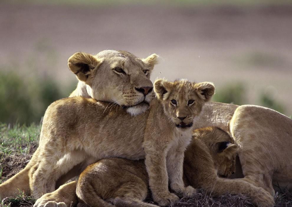 动物母亲节_图1-16