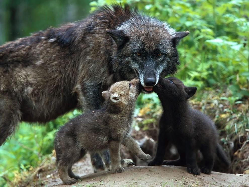 动物母亲节_图1-19