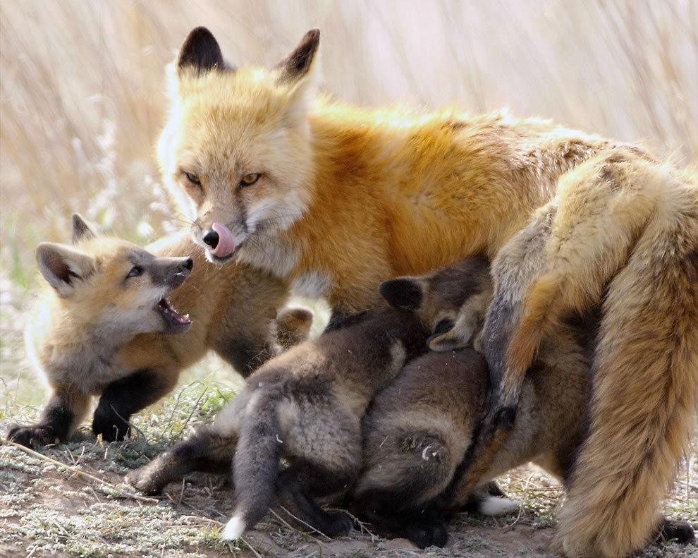动物母亲节_图1-20