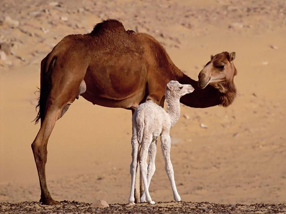 动物母亲节_图1-24