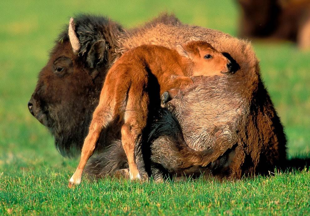 动物母亲节_图1-26
